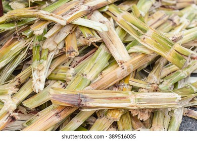 Sugarcane bagasse, nature fiber recycle for biofuel pulp and building materials.