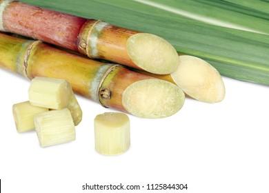Sugarcane, Cane, Sugarcane cut piece fresh, Sugar cane on white background, Sugarcane fresh