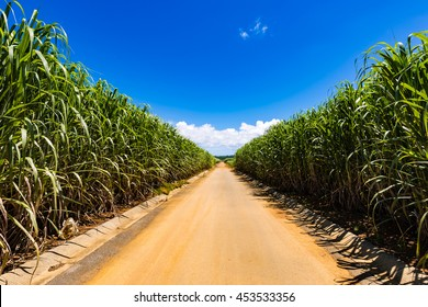 Sugarcane, farm roads, blue sky, landscape. Okinawa, Japan, Asia.