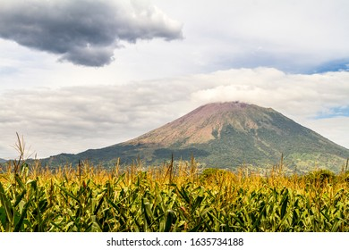 A sugarcane field at the bottom of Chonco volcano in Nicaragua