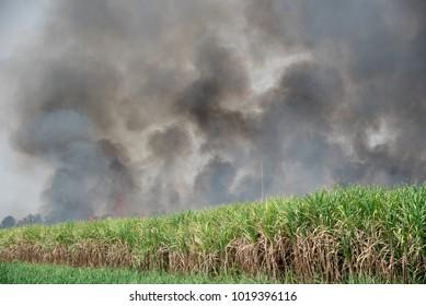 sugarcane fire burning