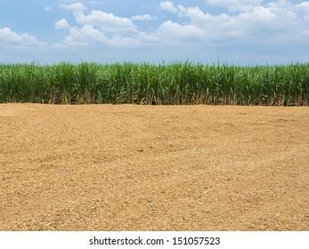 Sugarcane and ground. in thailand