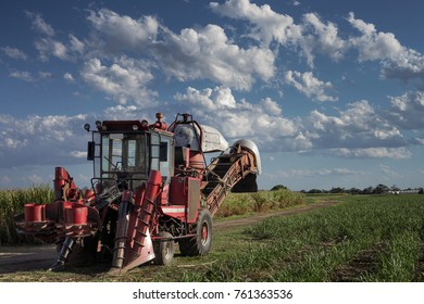 Sugarcane Harvester in sugarcane field with blue sky and loose clouds