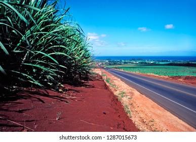 Sugarcane, Kamehameha Highway, heading North to Haleiwa, Oahu, Hawaii, USA