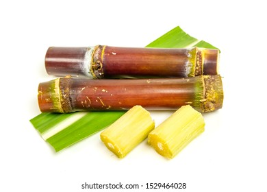 Sugarcane piece fresh isolated on white background. Sugarcane for sugar industry product concept.