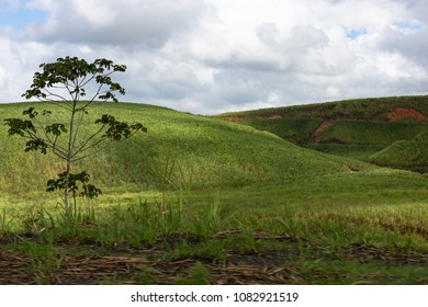 Sugarcane plantation in the southern woodland of Pernambuco, Brazil. Green hills and a shrub. In the background, sky with gray clouds.