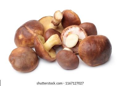 Suillus luteus mushrooms on white background