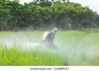 SUKHOTHAI, THAILAND - JUNE 17, 2018 : An unidentified people spraying chemical to young green rice field in Sukhothai on June 17, 2018.