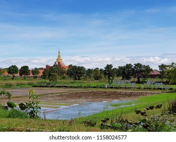 Sukhothai, Thailand-Circa June 2018: Organic Agriculture Project is located in Sukhothai airport and it allows visitors to take part in traditional Thai farm activities with nice outdoor view.