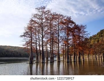Sukko Lake, Swamp Cypress Grove in Autumn