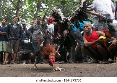 SUKOHARJO, INDONESIA - JANUARY 4, 2015: The atmosphere of the cockfighting arena at the Gawok traditional market in Sukoharjo, Central Java.