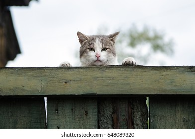 sullen grumpy cat sits climbing over a wooden fence and displeased looking