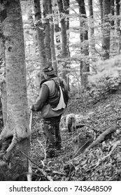 SULMONA, ITALY – OCTOBER 10, 2017: A truffle hunter searches the forest with his Lagotto Romagnolo for the prized black truffle in Sulmona.