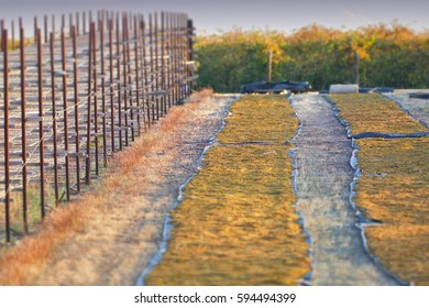 Sultana grape drying racks. Location: Filmed Mildura Region