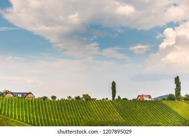 Sulztal, Styria / Austria - 17 September 2018: Vineyards Sulztal famous destination wine street area south Styria , wine country in summer. Tourist destination.