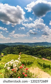 Sulztal, Styria / Austria - 2 June 2018: Vineyards Sulztal Leibnitz area famous destination wine street area south Styria , wine country in summer. Tourist destination. Green hills and crops of grapes