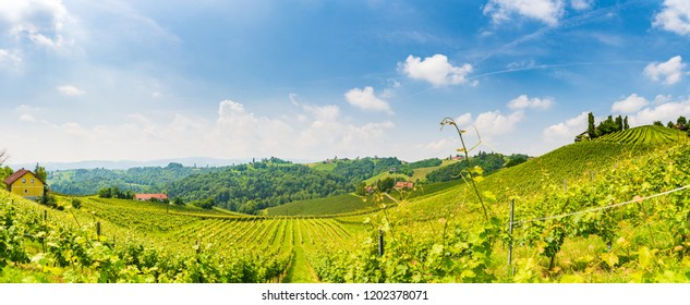 Sulztal, Styria / Austria - 2 June 2018: Vineyards Leibnitz area famous destination wine street area south Styria , wine country in summer. Tourist destination. Green hills and crops of grapes.