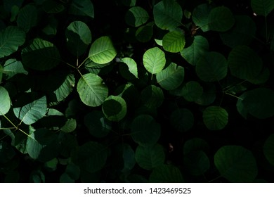 sumac green leaves spring background