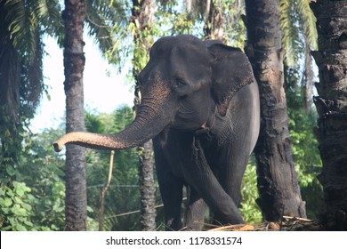 the Sumatran elephant waving his trunk and welcomes the gestures of the other elephants in the national Park of Sumatra