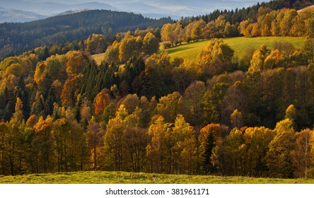 Sumava, forest, Czech Republic