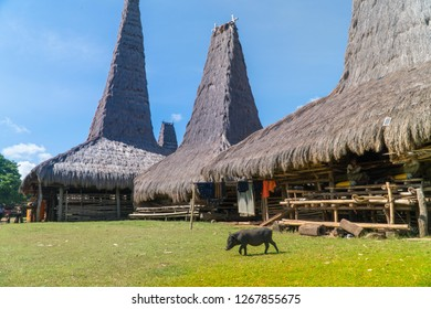 SUMBA, INDONESIA - MARCH 23, 2018: T Pig farm crossing at Traditional hut of Ratenggaro at Sumba, East Nusa Tenggara, Indonesia