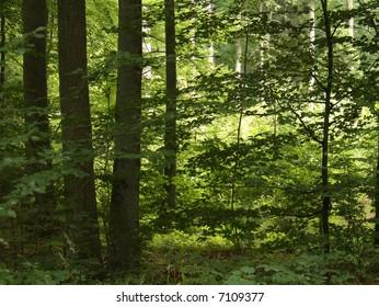 sumer forest