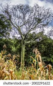 sumergido en la naturaleza peruana