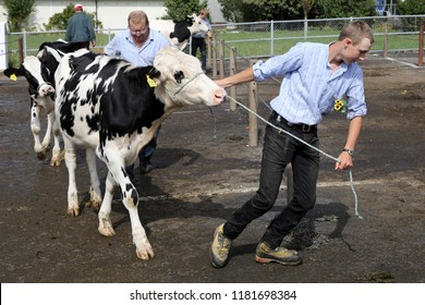 Sumiswald, Switzerland, September 14 2018: Loading the cattle after the Parade in the village Sumiswald of the autumnal ceremonial cattle drive from mountain pastures into valleys