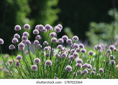 Summer afternoon admiring Danish Flowers