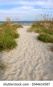 Summer afternoon marine landscape with way to the atlantic ocean beach through sand dunes at the Huntington Beach State Park, South Carolina, USA, myrtle Beach area. View before hurricane Matthew.