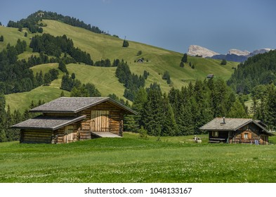 Summer in Alpe di Siusi/Seiser Alm plateau, largest high-altitude alpine meadow in Europe, major tourist attraction for hiking and skiing, with the Dolomites mountains around, South Tyrol, Italy