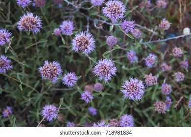 Summer alpine flowers.