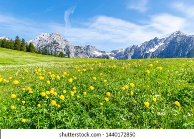 Summer alps landscape with flower meadows and mountain range in background. Photo taked near Walderalm, Austria, Gnadenwald, Tyrol Region