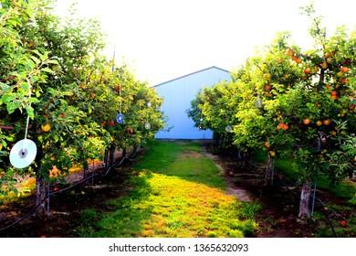 Deflector Images, Stock Photos & Vectors | Shutterstock