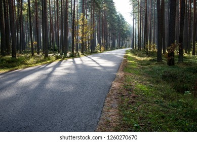 summer asphalt road in perspective with signs and markings, green forest on both sides