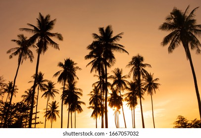 Summer background with coconut trees and sunset warm tone.