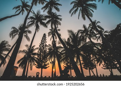 Summer background with coconut trees and sunset warm tone. Vung Tau city aerial view with beautiful sunset and palm tree. Vung Tau is the capital of the province since the province's founding.