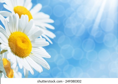 Summer background with colorful daisies against the sky