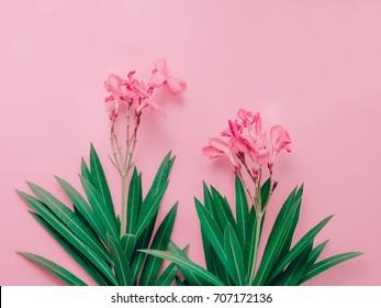 summer background concept with bouquet of pink oleander tropical flower with leaf arrange on pastel pink background