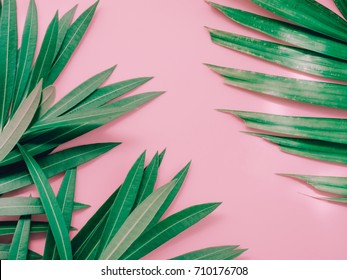 summer background concept with green leaf of oleander tropical flower arrange on pastel pink background