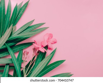 summer background concept with leaf and flower bloom of oleander tropical arrange on pastel pink background