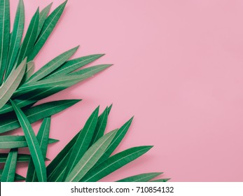 summer background concept with leaf of oleander tropical flower arrange on pastel pink background