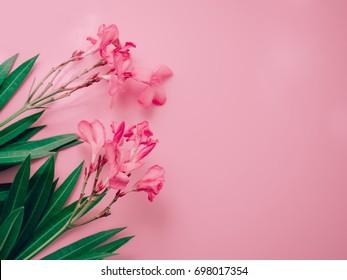 summer background concept with pink oleander tropical flower arrange on pastel pink background