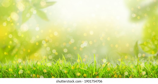 Summer background with frame of grass and leaves on nature. Juic