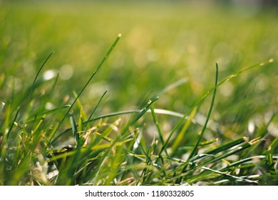 Summer background with green grass macro ground point view