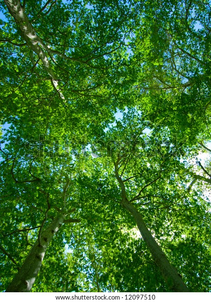summer background of green trees