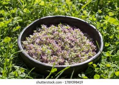 Summer background of natural thyme herbs in unique handmade dish of black pottery in sunlight
