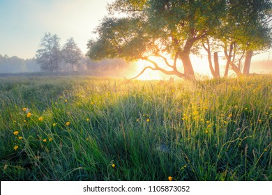 Summer background. Summer nature early in the morning. Colorful mist in morning sunlight over meadow. Sun shines through tree on wild blooming flowers.