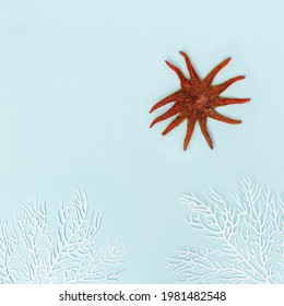 Summer background with red seastar and white coral on pastel blue. Concept of travel and vacation. Flat lay, top view, copy space
