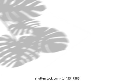 Summer background of shadows branch leaves on a white wall. White and Black for overlaying a photo or mockup